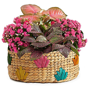 Guyana online Florist - Arrangement of Blooming Plants Bouquet