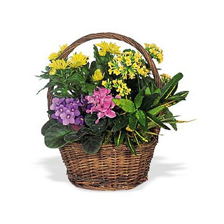 Oslo online Florist - Bountiful Garden Flower Basket Bouquet