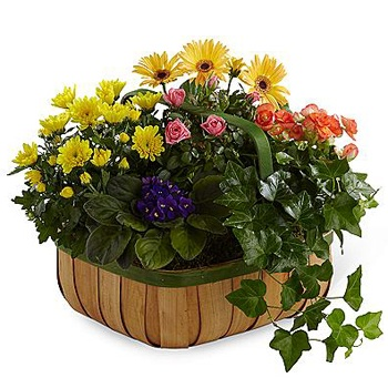 Houston flowers  -  Blossoming Basket Baskets Delivery