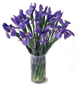 British Virgin Islands online Florist - Bunch of Irises Bouquet