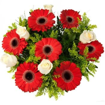 Pakistan blomster- Dance of the Roses and Daisies Bouquet Blomst Levering