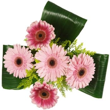Fort-de-France blomster- Darling Daisies Bouquet Blomsterarrangementer bukett