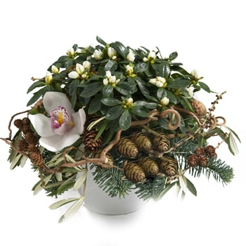 Norway flowers  -  Holiday Azalea Arrangement Baskets Delivery