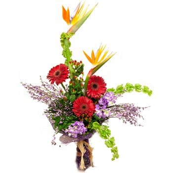 Pakistan blomster- Paradise and Daisies Bouquet Blomst Levering