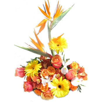 Delt Online blomsterbutikk - Tropical Journey Bouquet Bukett