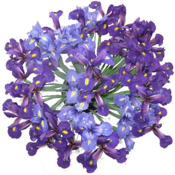 Azerbaijan, Spain flowers  -  Iris Explosion Bouquet Baskets Delivery