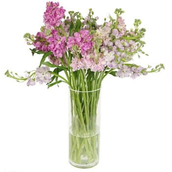 Alboraia flowers  -  Pastel Cloud Bouquet Flower Delivery