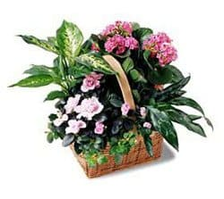 Bonaire flowers  -  Pink Assortment Basket Flower Delivery