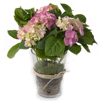 Oslo online Florist - Potted Beauty Bouquet
