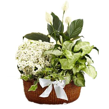 Houston flowers  -  Serene White Garden Baskets Delivery