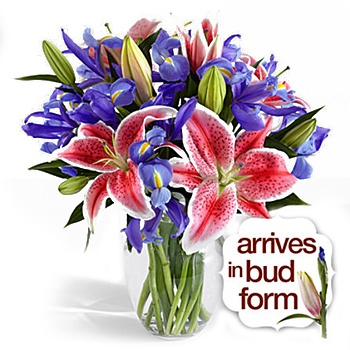 Houston flowers  -  Skygazer Daydream Bouquet Baskets Delivery
