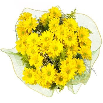 Saint Kitts And Nevis flowers  -  Springtime Sun Bouquet Flower Delivery