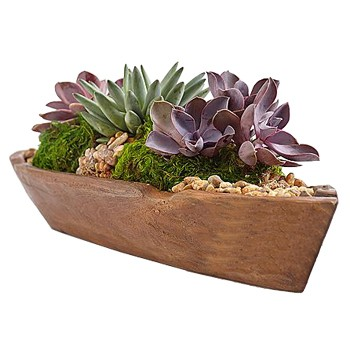 Minneapolis flowers  -  Succulent Teak Boat Baskets Delivery