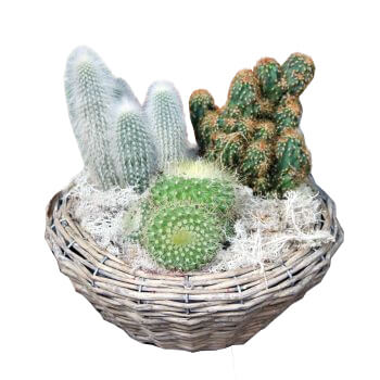Leeds flowers  -  A Dab of the Desert Baskets Delivery