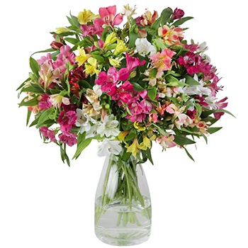 Bradford flowers  -  Beautifully Wild Alstroemerias Flower Delivery