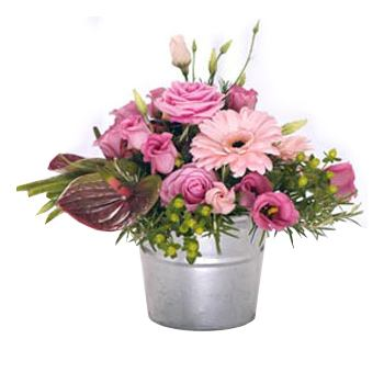 London blomster- Pinky Delight kurver Levering