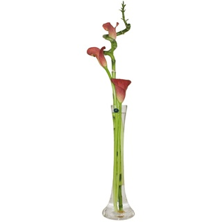 Bradford flowers  -  The Modern Calla Lily Baskets Delivery