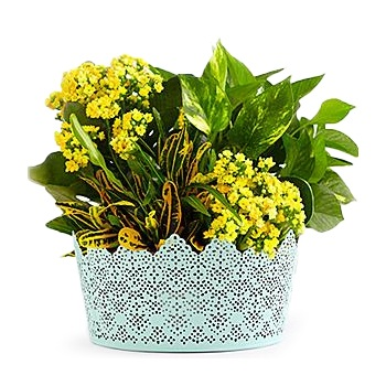 Virginia Beach flowers  -  A Box Of Sunshine Baskets Delivery