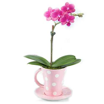 Long Beach flowers  -  A Cup Of Orchid Baskets Delivery