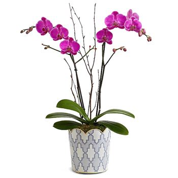 Long Beach flowers  -  Lovely Living Orchid Baskets Delivery