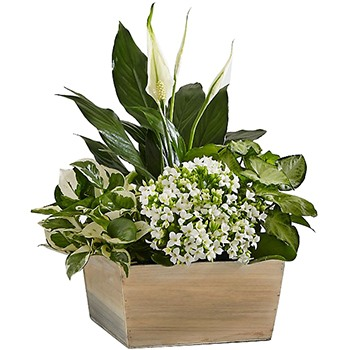 Oakland flowers  -  Serene White Garden Baskets Delivery