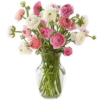 Washington blomster- Sweetie Pie Bouquet Kurve Levering