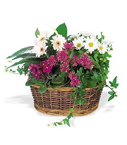 Flores flowers  -  Send a Smile Flower Basket Delivery