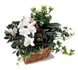 Lyon online Florist - White Assortment Basket Bouquet