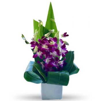 Gold Coast flowers  -  Paola Flower Delivery