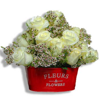Juncos flowers  -  Snowflakes Flower Delivery