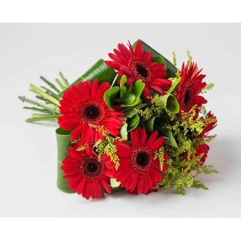 Praia Grande flowers  -  Bouquet of 6 same-colored gerberas Flower Delivery