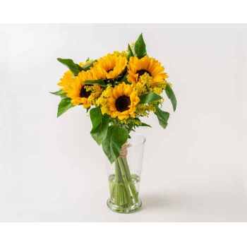Brasília online Florist - Potted Sunflowers Bouquet