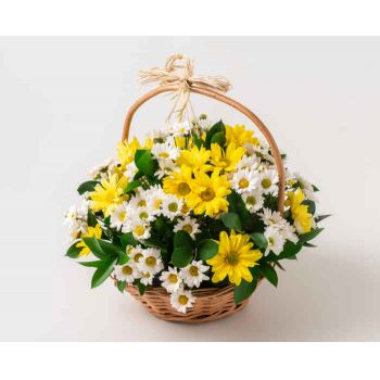 Marabá flowers  -  Two-color Daisy Basket Flower Delivery