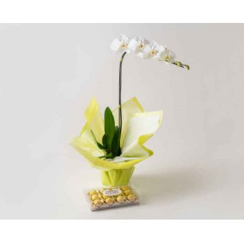 Belém online Florist - Phalaenopsis Orchid for Gift and Chocolate Bouquet