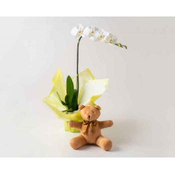 Brasília online Florist - Phalaenopsis Orchid for Gift and Teddybear Bouquet
