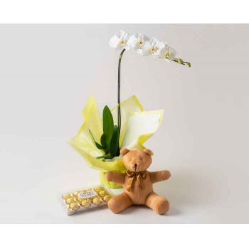 Brasília online Florist - Phalaenopsis Orchid for Gift, Chocolates and  Bouquet