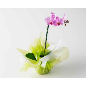 Patos flowers  -  Bicolor Phalaenopsis Orchid Flower Delivery