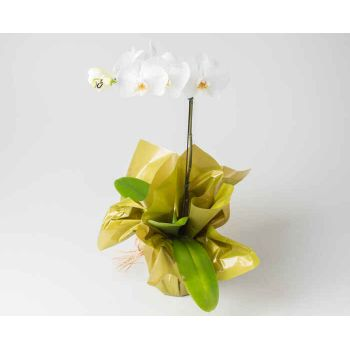 Praia Grande flowers  -  Phalaenopsis Orchid for Gift Flower Delivery