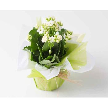 Sao Paulo flowers  -  White Fortune Flower for Gift Delivery