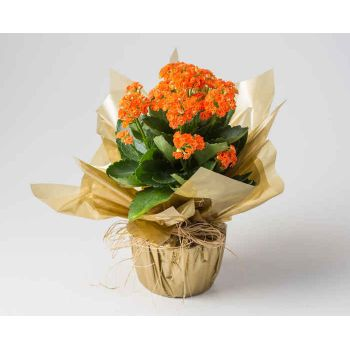 fleuriste fleurs de Brasilia- Fleur orange de fortune Bouquet/Arrangement floral