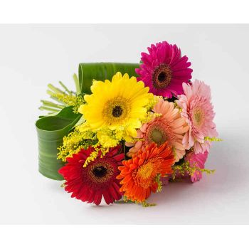 Ferraz de Vasconcelos flowers  -  Bouquet of 8 Colorful Gerberas Flower Delivery