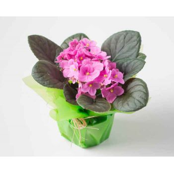 Alagoinhas flowers  -  Violet Vase for Gift Flower Delivery