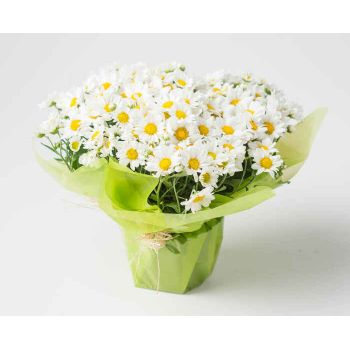 Belém flowers  -  Planted Daisies Flower Bouquet/Arrangement