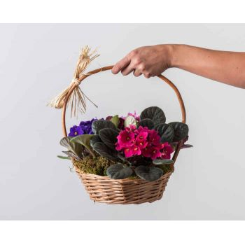 Recife flowers  -  Basket with 3 Violet Vases Flower Bouquet/Arrangement