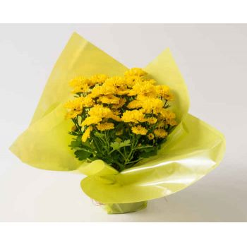 Novo Hamburgo flowers  -  Gift Vase of Daisies Flower Delivery