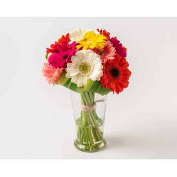 Fortaleza flowers  -  12 Colorful Gerberas in Vase Flower Bouquet/Arrangement