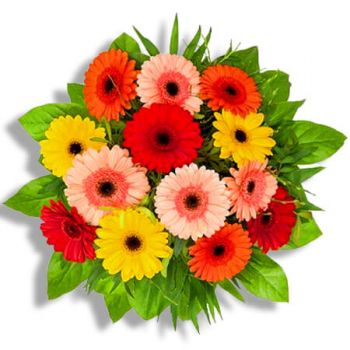 Halle flowers  -  Crazy colors Flower Delivery
