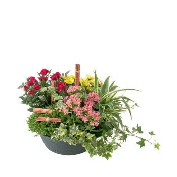 Tarbes flowers  -  Summer bowl Flower Delivery