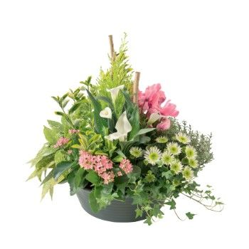 Tarbes flowers  -  Spring bowl Flower Delivery