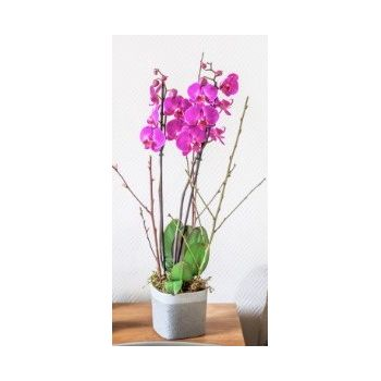 Tarbes flowers  -  Pink regards Flower Delivery